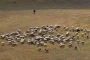 Shepherd at Lago Rosset, Gran Paradiso, Italy