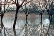 Walnuttrees at a flooding Dordogne, Cénac, Dordogne/ Perigord, France