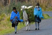 Women and lama, near Zumbahua, Andes, Ecuador, July 2010
