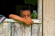 Boy with parrot, indigenous people, Amazon tropical rainforest, Cuyabeno national park, Ecuador, July 2010