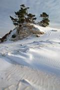Pinetrees (Pinus sylvestris) and sanddune in the snow, Kootwijkerzand, Veluwe, The Netherlands, December 2010